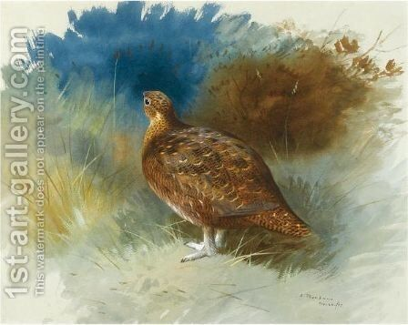 Grouse 2 by Archibald Thorburn - Reproduction Oil Painting