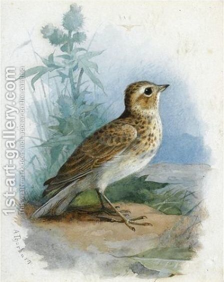 Skylark by Archibald Thorburn - Reproduction Oil Painting
