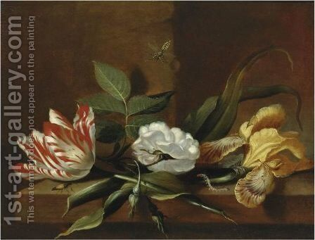 Still Life With A Yellow Iris, A Parrot Tulip, A White Rose And Insects On A Wooden Table Ledge by Jacob Marrel - Reproduction Oil Painting