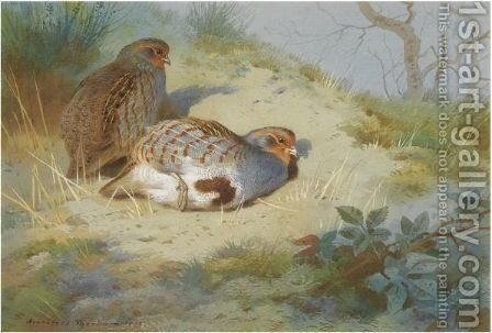 A Pair Of Partridges On A Sandy Bank by Archibald Thorburn - Reproduction Oil Painting