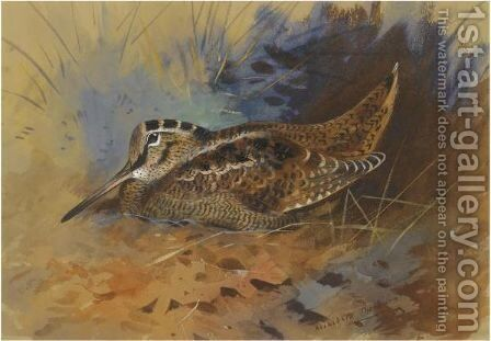 Woodcock 2 by Archibald Thorburn - Reproduction Oil Painting