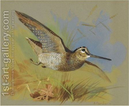 A Woodcock In Flight by Archibald Thorburn - Reproduction Oil Painting