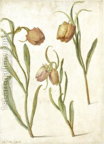 Study Of Three Fritillaries by Herman Saftleven - Reproduction Oil Painting