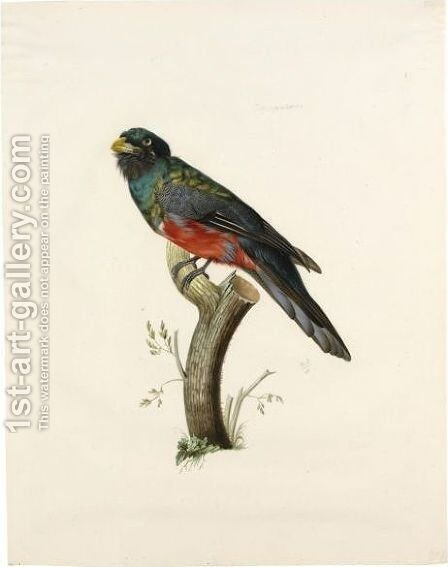 Male South American Trogon (Trogonidae Sp.) by Jacques Barraband - Reproduction Oil Painting