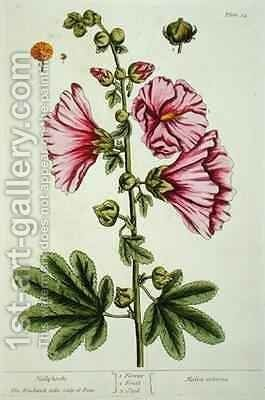 Hollyhocks, plate 54 from 'A Curious Herbal' by Elizabeth Blackwell - Reproduction Oil Painting