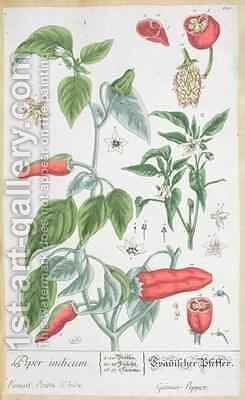 Guinea Pepper (Piper Indicum) plate 129 from the German edition of 'A Curious Herbal' by Elizabeth Blackwell - Reproduction Oil Painting