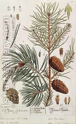 Pine Tree, from 'A Curious Herbal' by Elizabeth Blackwell - Reproduction Oil Painting