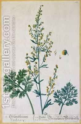 Absinthe, plate from 'Herbarium Blackwellianum' by Elizabeth Blackwell - Reproduction Oil Painting