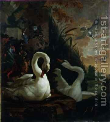 A Pair of Mute Swans, One Preening by Abraham Bisschop - Reproduction Oil Painting