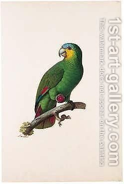 Blue-fronted Amazon (Amazona Aestiva) by Jacques Barraband - Reproduction Oil Painting