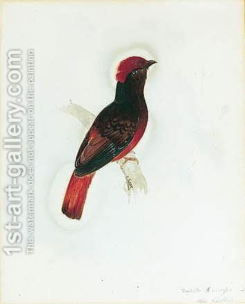 A Red Chatterer by Edward Lear - Reproduction Oil Painting