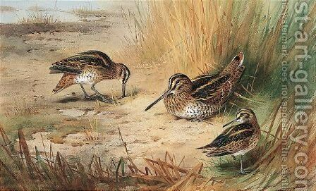 Snipe 2 by Archibald Thorburn - Reproduction Oil Painting