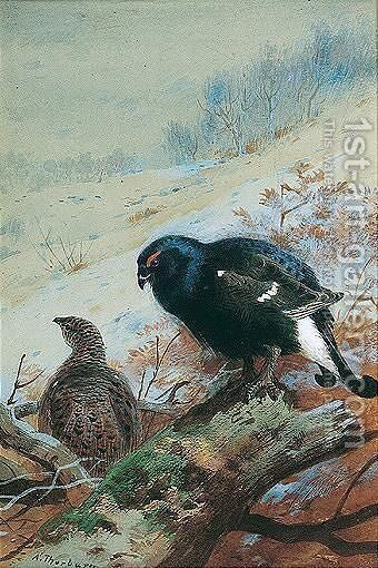 Black Game In Winter by Archibald Thorburn - Reproduction Oil Painting
