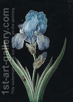 An Iris With A Red Beetle by Barbara Regina Dietzsch - Reproduction Oil Painting