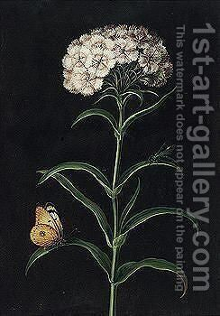 A Sweet William With A Butterfly And A Moth by Barbara Regina Dietzsch - Reproduction Oil Painting