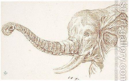 Study Of The Head Of An Elephant by Charles-Nicolas II Cochin - Reproduction Oil Painting