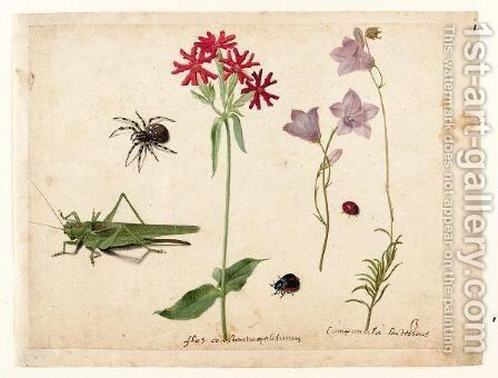 A Sheet Of Studies With A Grasshopper, A Spider, A Ladybird And A May-Bug,  And Two Campanulas And A Maltese Cross by Jacques (de Morgues) Le Moyne - Reproduction Oil Painting