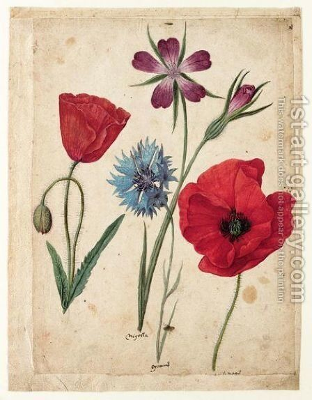 A Sheet Of Studies Of Flowers Two Corn Poppies, A Corn Cockle And A Cornflower by Jacques (de Morgues) Le Moyne - Reproduction Oil Painting