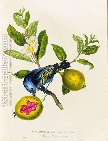 Blue bird by James Forbes - Reproduction Oil Painting
