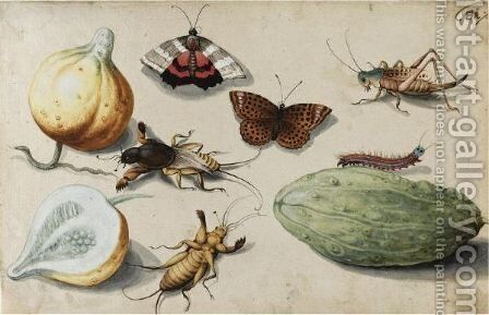 Butterfly, Beetle, Grasshopper And Caterpillar, With Gourds by (after) Georg Flegel - Reproduction Oil Painting