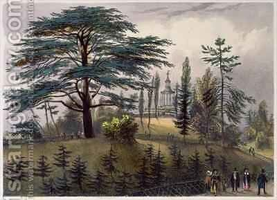 The Cedar of Lebanon and the Labyrinth at the Jardin des Plantes ...