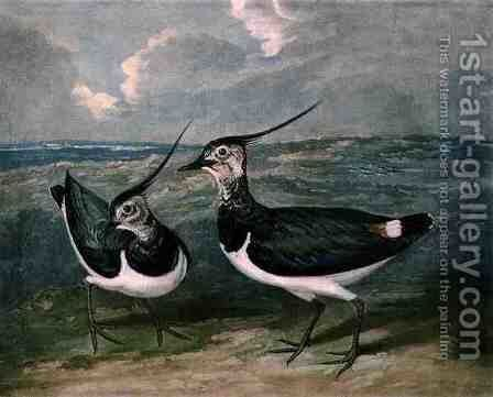 Plovers, plate 9 of British Feather Game by (after) James Barenger - Reproduction Oil Painting