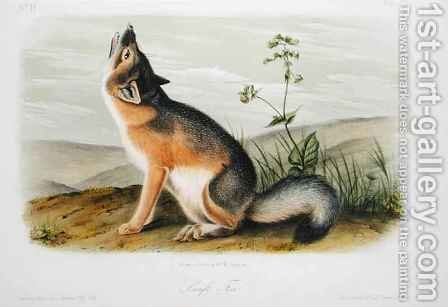 Swift Fox, plate 52 from 'Quadrupeds of North America' by (after) Audubon, John Woodhouse - Reproduction Oil Painting
