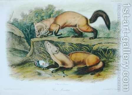 Pine Marten, plate 138 from 'Quadrupeds of North America' by (after) Audubon, John Woodhouse - Reproduction Oil Painting