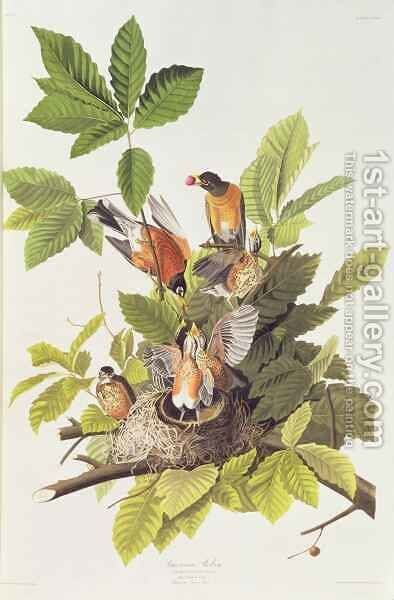 Turdus migratorius (American Robin) one male, two females and young by (after) Audubon, John Woodhouse - Reproduction Oil Painting