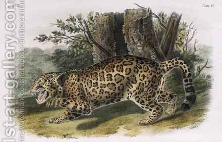 The Jaguar by (after) Audubon, John Woodhouse - Reproduction Oil Painting