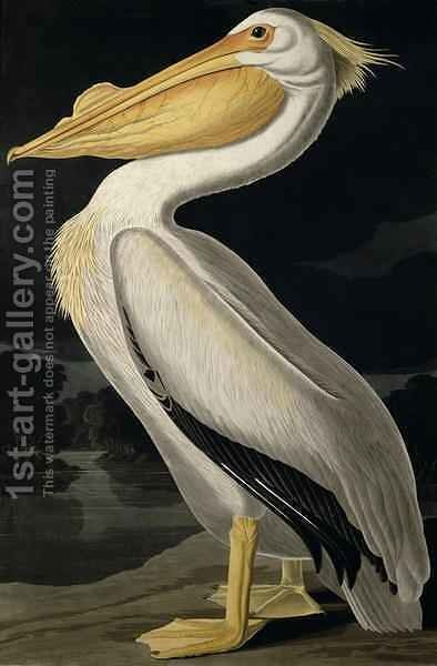American White Pelican, from 'Birds of America' by (after) Audubon, John James - Reproduction Oil Painting