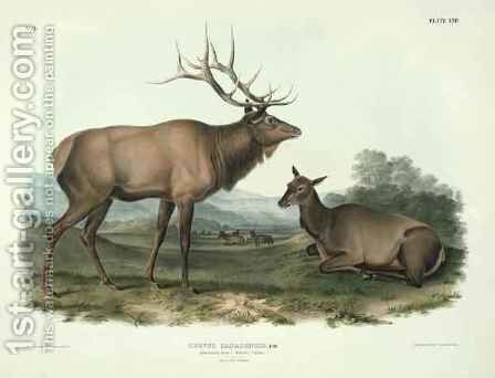Cervus Canadensis (American Elk, Wapiti Deer) by (after) Audubon, John James - Reproduction Oil Painting