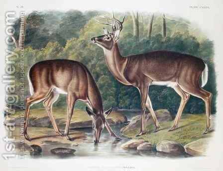 Common or Virginia Deer by (after) Audubon, John James - Reproduction Oil Painting