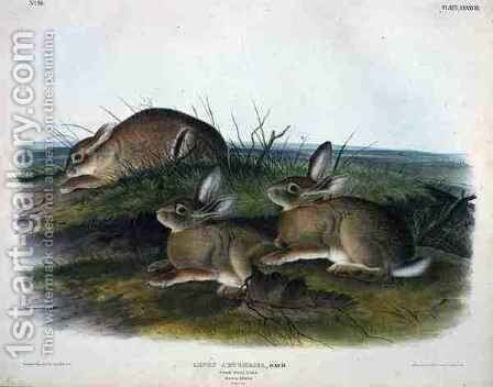 Lepus Artemesia (Worm Wood Hare) by (after) Audubon, John James - Reproduction Oil Painting