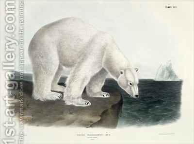 Ursus Maritimus (Polar Bear) by (after) Audubon, John James - Reproduction Oil Painting