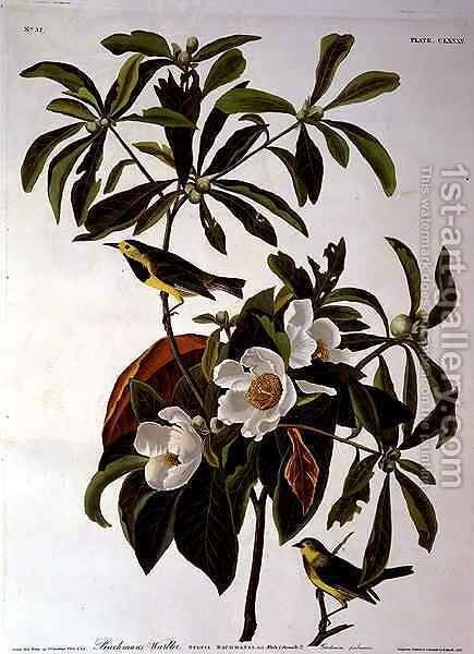Bachman's Warbler, from 'Birds of America' by (after) Audubon, John James - Reproduction Oil Painting