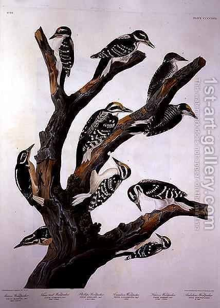 Woodpeckers, from 'Birds of America' by (after) Audubon, John James - Reproduction Oil Painting