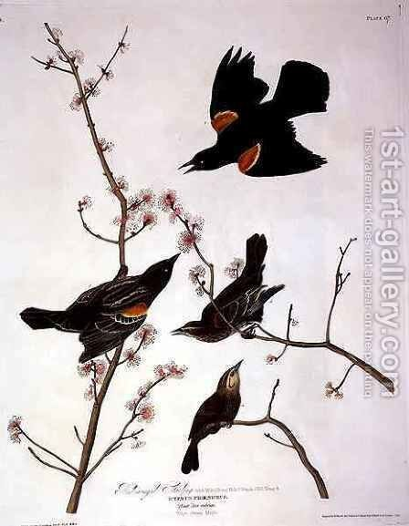 Red-winged Starling, from 'Birds of America' by (after) Audubon, John James - Reproduction Oil Painting