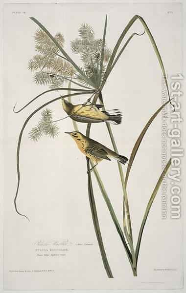 Prairie Warbler, from 'Birds of America' by (after) Audubon, John James - Reproduction Oil Painting