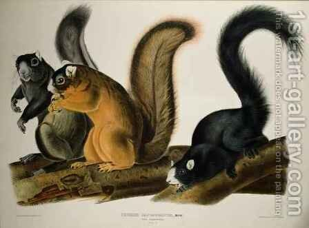 Fox Squirrel, from 'Quadrupeds of America' by (after) Audubon, John James - Reproduction Oil Painting
