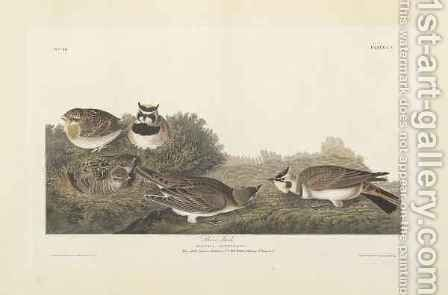 Shore Lark, illustration from 'The Birds of America' by (after) Audubon, John James - Reproduction Oil Painting