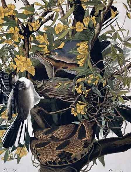 Mocking Birds and Rattlesnake, from 'Birds of America' by (after) Audubon, John James - Reproduction Oil Painting