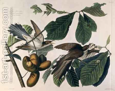 Yellow-billed Cuckoo, from 'Birds of America' by (after) Audubon, John James - Reproduction Oil Painting