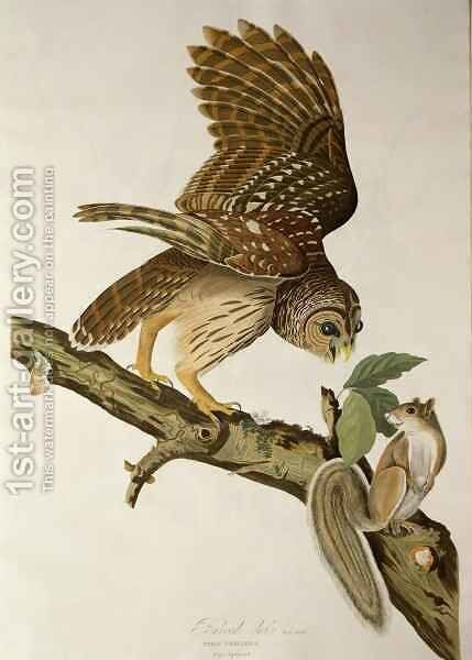 Barred Owl, from 'Birds of America' by (after) Audubon, John James - Reproduction Oil Painting