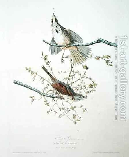 Song Sparrow, from 'Birds of America' by (after) Audubon, John James - Reproduction Oil Painting
