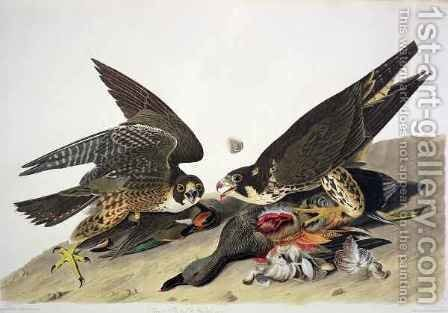 Great Footed Hawk, from 'Birds of America' by (after) Audubon, John James - Reproduction Oil Painting