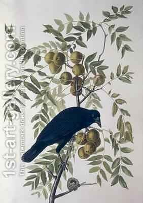 American Crow, from 'Birds of America' by (after) Audubon, John James - Reproduction Oil Painting