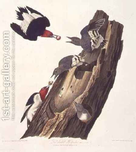 Melanerpes erythrocephalus (Red-headed woodpecker) one male, two female and young by (after) Audubon, John James - Reproduction Oil Painting