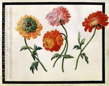 Chrysanthemums by Claude Aubriet - Reproduction Oil Painting