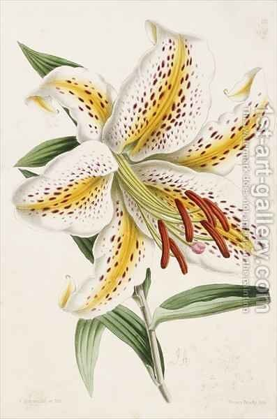 Lily, from 'The Floral Magazine' by James Andrews - Reproduction Oil Painting